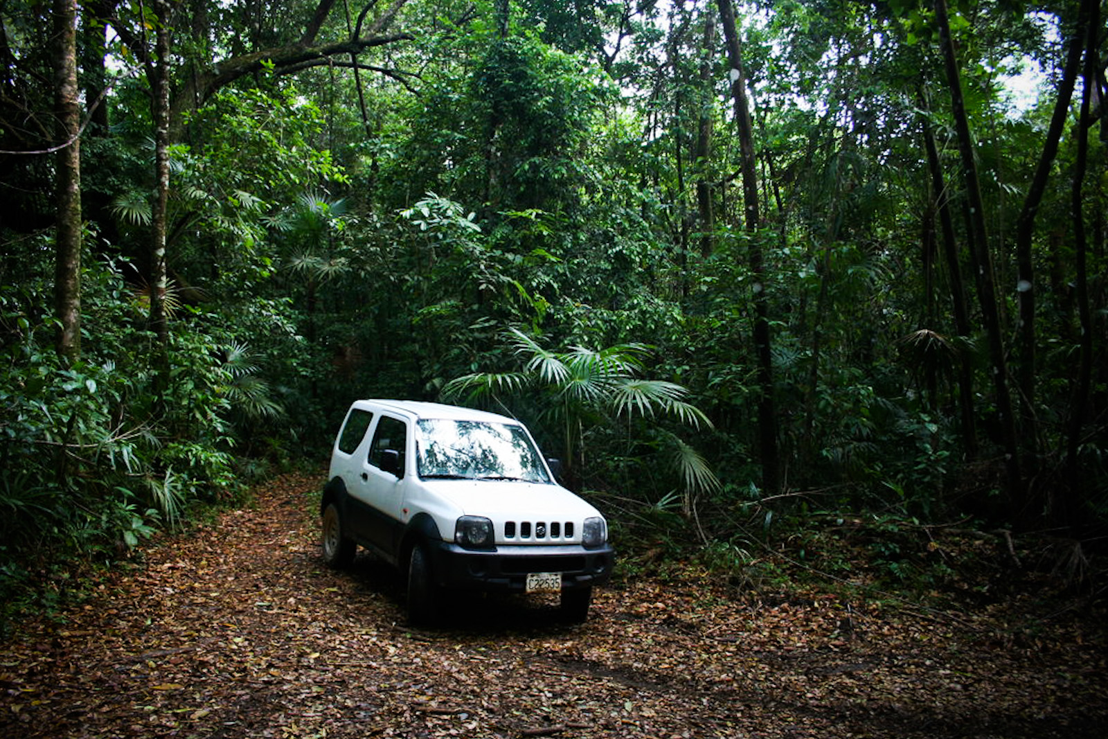 Image result for car in jungle
